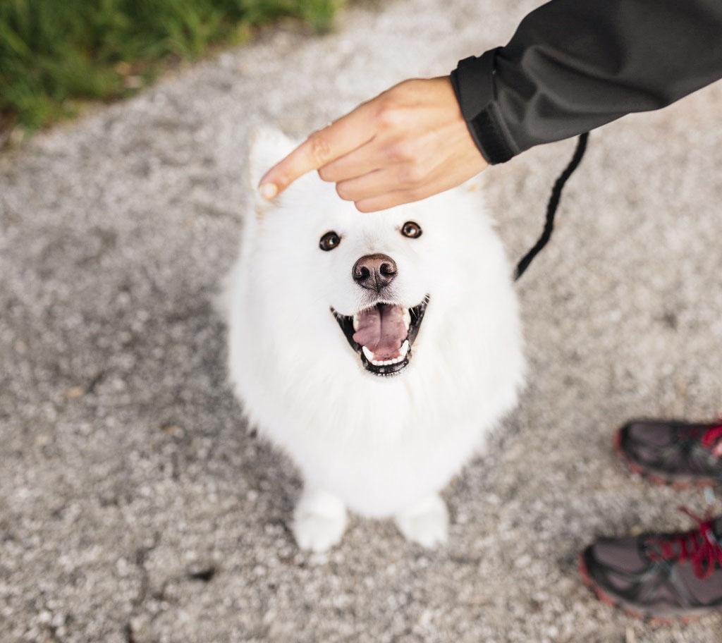 warum-soll-man-hunde-beim-training-mit-leckerlis-belohnen