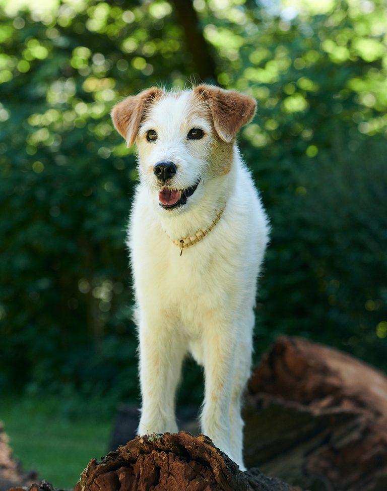 gemeinsamkeiten-von-welpen-und-seniorhunde