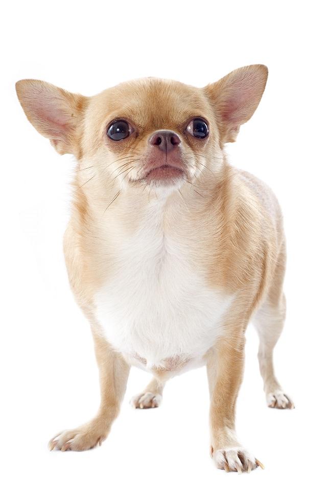 hat-mein-hund-übergewicht